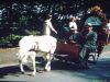 Erntedank1980_0027