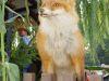 Erntedank2005_0030