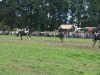 Erntedank2008_0210