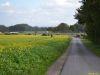 Fuchsjagd2014_0015