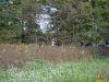 Fuchsjagd2014_0066